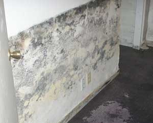 mold in my basement