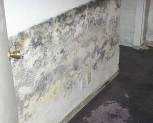 how to tell if there is mold in my basement aquaguard waterproofing. Black Bedroom Furniture Sets. Home Design Ideas
